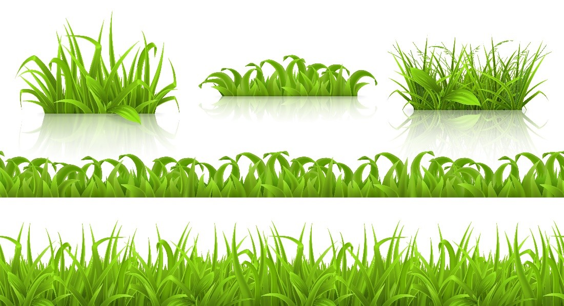 Concept image showing different types of grass
